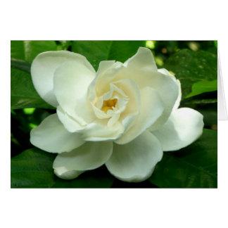 Cartão Gardenia da selva
