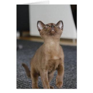 Cartão gatinho burmese europeu