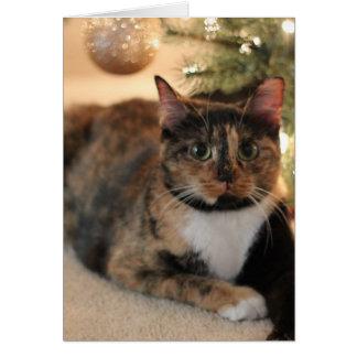 Cartão Gatinho da chita sob a árvore de Natal