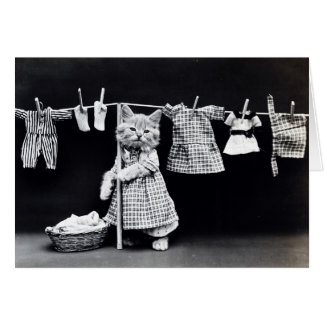 Cartão Gatinho do dia da lavanderia