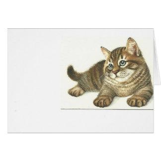 Cartão Gatinho do gato malhado