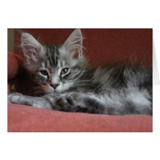 Cartão Gatinho do racum de Maine, um puss novo sonolento