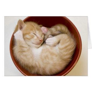 Cartão Gatinho do sono na bacia vermelha simples no