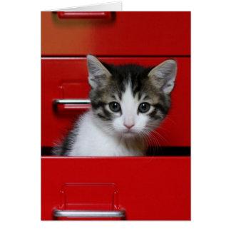 Cartão Gatinho em uma gaveta vermelha