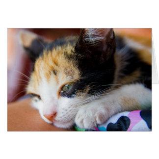 Cartão Gatinho sonolento da chita