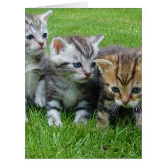 Cartão Gatinhos bonitos que sentam-se na grama