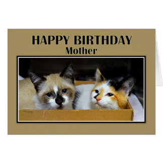 Cartão Gatinhos em um feliz aniversario da mãe da caixa