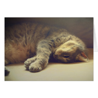 Cartão Gato adorável