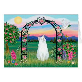 Cartão Gato branco - mandril cor-de-rosa