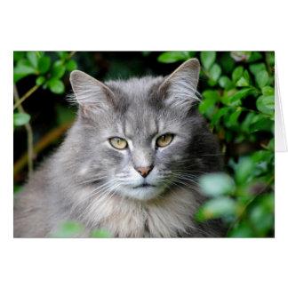 Cartão Gato cinzento