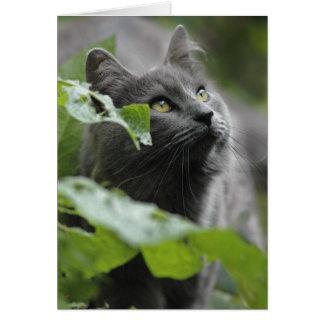 Cartão Gato cinzento no jardim