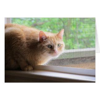 Cartão Gato da laranja de Odie