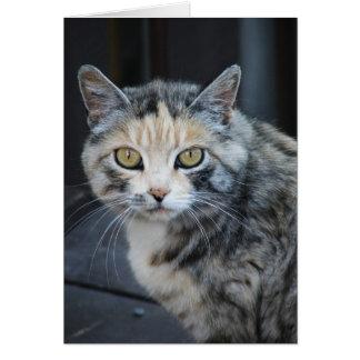 Cartão Gato de chita