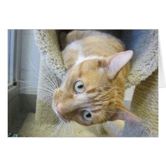 Cartão Gato de gato malhado alaranjado e branco