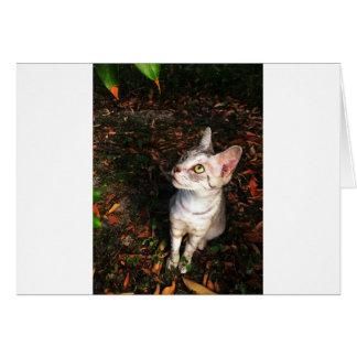 Cartão Gato de gato malhado cinzento que olha acima