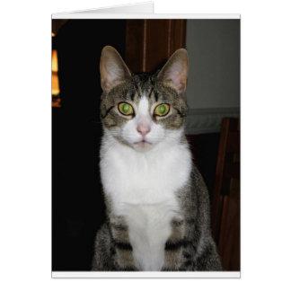 Cartão Gato de gato malhado com os olhos verdes grandes