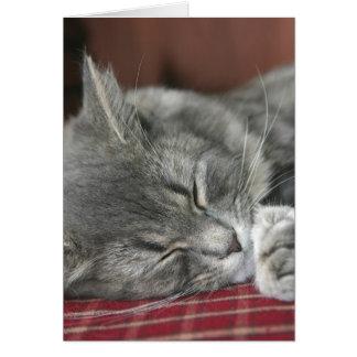 Cartão Gato de gato malhado Napping Notecard