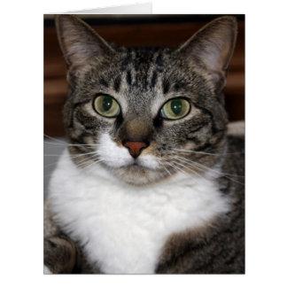 Cartão Gato de gato malhado que olha o foto Vazio-Dentro