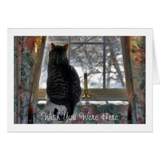 Cartão Gato de gato malhado que olha para fora a janela