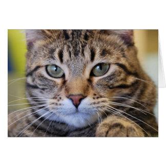 Cartão Gato de gato malhado Verde-Eyed sério