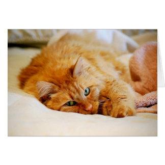 Cartão Gato de racum de Maine da laranja doce