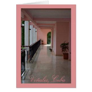 Cartão Gato de Vinales Cuba no hotel cor-de-rosa