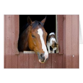 Cartão Gato e cavalo - rancho do cavalo - amantes do
