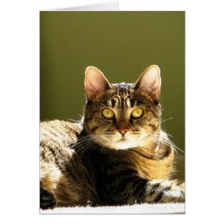 Cartão Gato em Sun