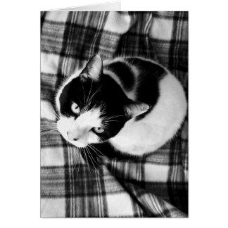 Cartão Gato em um preto & em um branco da esteira