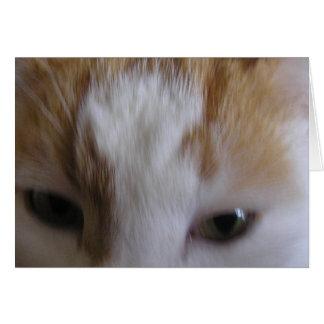 Cartão Gato eyed sonolento