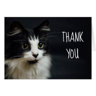 Cartão Gato, gatinho, obrigado Notecard pequeno