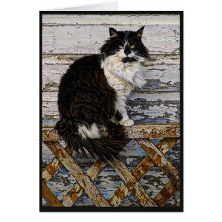Cartão Gato longo preto e branco do smoking do cabelo na