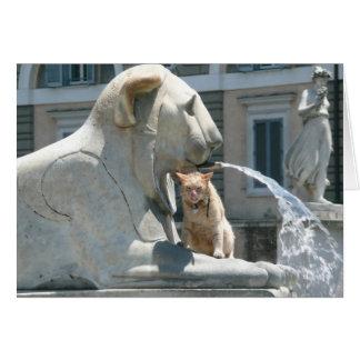 Cartão Gato mal-humorado em Roma, fonte na praça