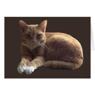 Cartão Gato malhado alaranjado com gato branco