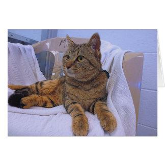 Cartão Gato malhado bonito de Brown