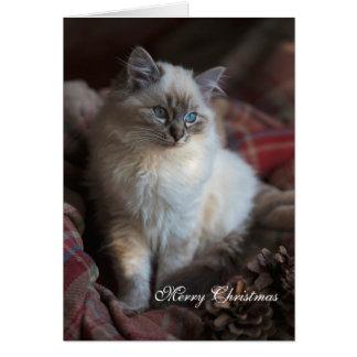 Cartão Gato malhado Ragdoll do selo