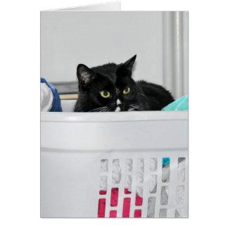 Cartão gato na cesta de lavanderia