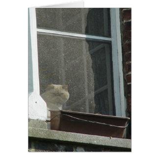Cartão Gato na janela
