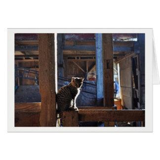 Cartão - gato no celeiro