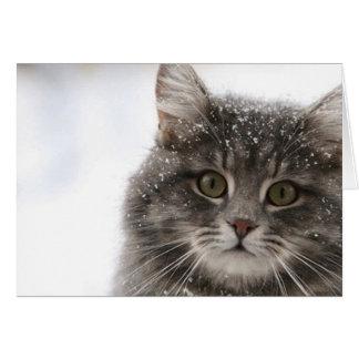 Cartão gato peludo dos animais de animais de estimação da