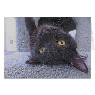 Cartão Gato preto bonito