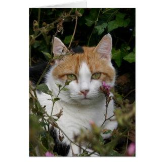 Cartão gato preto e branco do gengibre bonito no jardim