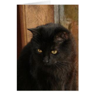 Cartão Gato preto, olhos ambarinos, tons da terra