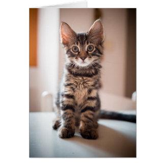 Cartão Gato que dorme no gatinho de BlanketTabby na mesa