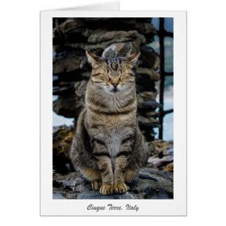 Cartão - gato Relaxed em Cinque Terre, Italia