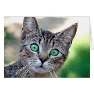 Cartão Gato surpreendido