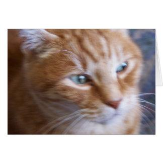 Cartão gatos 002