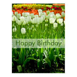 Cartão   Geburtstagskarte Tulpen do aniversário
