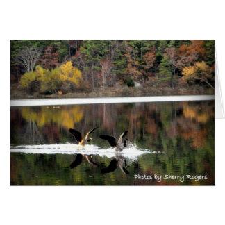 Cartão ~Geese em Clayton Lake~