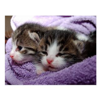 cartão gêmeo dos gatinhos